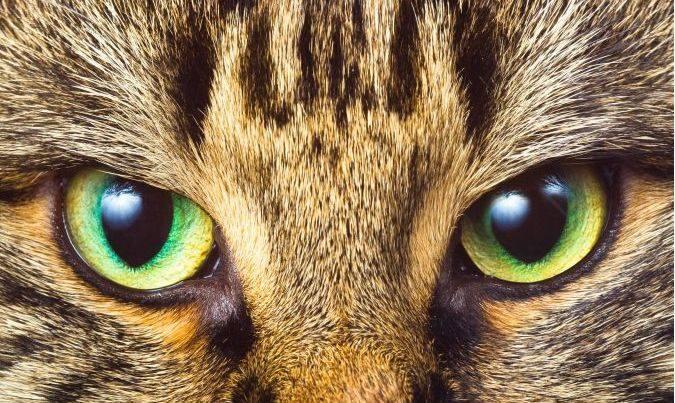 Sostieni l'oasi felina di Pianoro