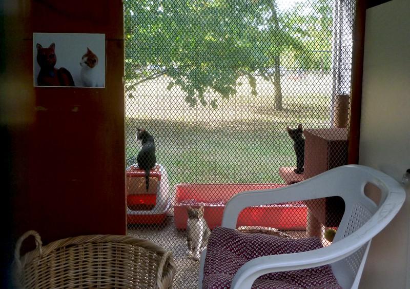Mici in veranda