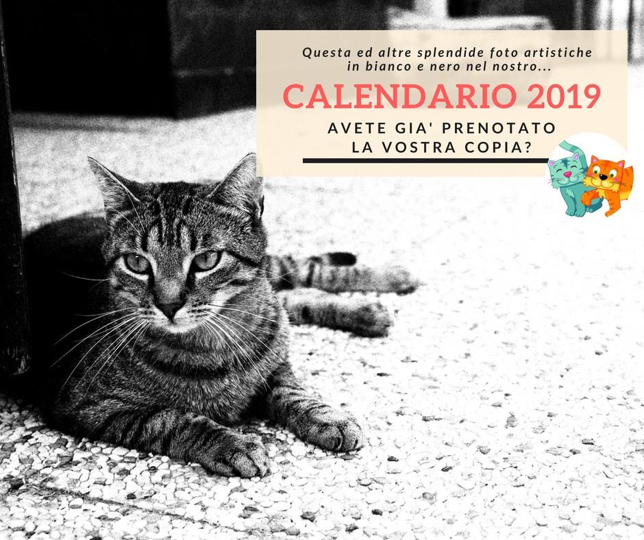 Il Calendario dell'Oasi 2019